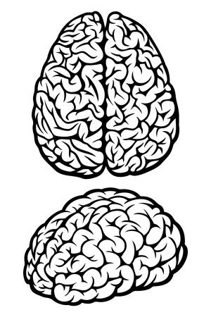 kopf: Gehirn. Vektor-Illustration