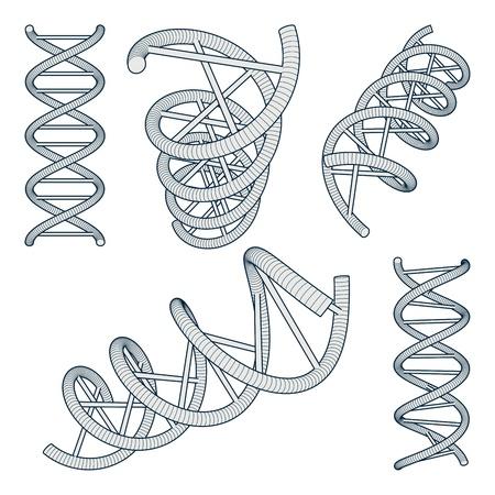 Set of DNA Symbols on white background. Vector Illustration Illustration