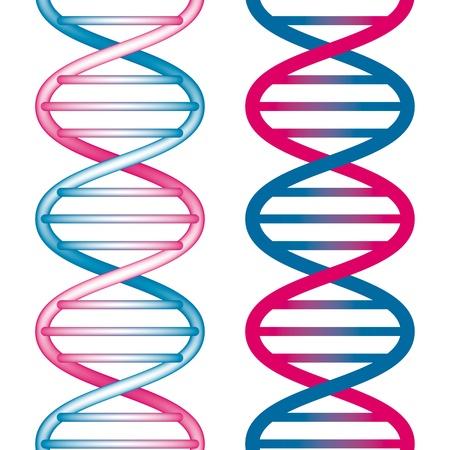 Seamless DNA Symbol on white background. Vector Illustration Stock Vector - 10508726