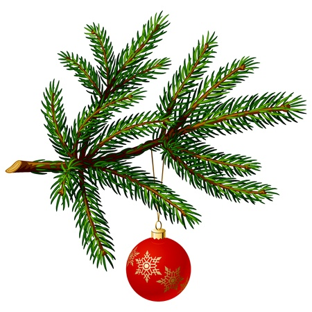 evergreen: Pine tree branch with Christmas ball on white background. Vector Illustration