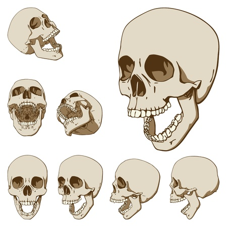 Set of seven drawings of human skull   Vector illustration