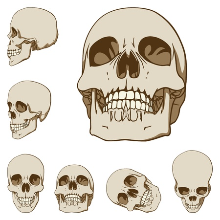 animal skull: Set of six drawings of human skull