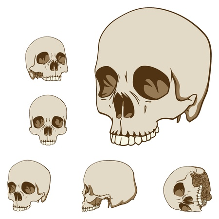 Set of five drawings of human skull illustration Stock Vector - 12798774