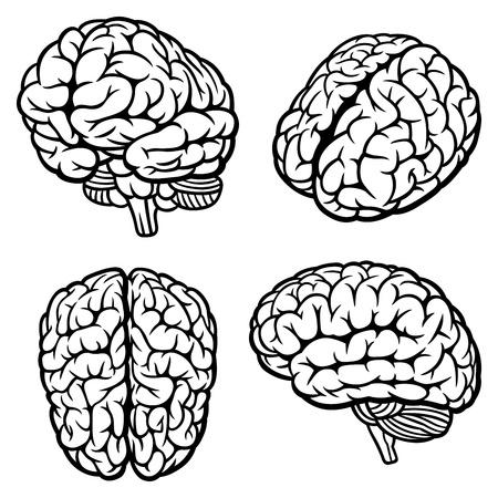 cerebro blanco y negro: Cerebro Humano Conjunto de cuatro Ilustración Vector vistas