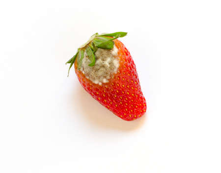 uneatable: Rotten Strawberry on white background Stock Photo