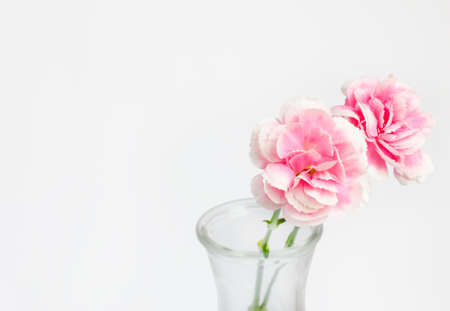 Pink flower in vase with place for text and work path photo