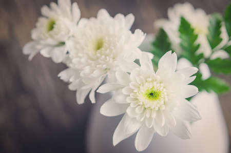 to white: White Chrysanthemum flower in white vase on wooden table with vintage and vignette tone