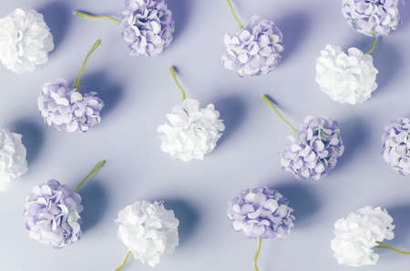 Blue and white Hydrangea flowers pattern on blue background Stock Photo
