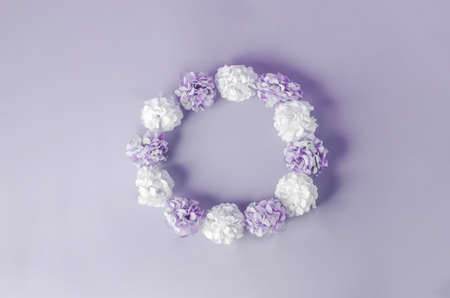 White and purple color of Hydrangea flowers with round frame shape on purple background Stock Photo