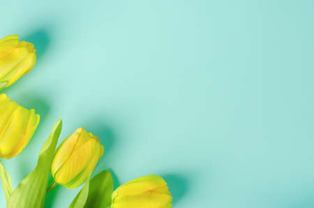 Artificial yellow tulip flowers bouquet on light green blue background Stock Photo