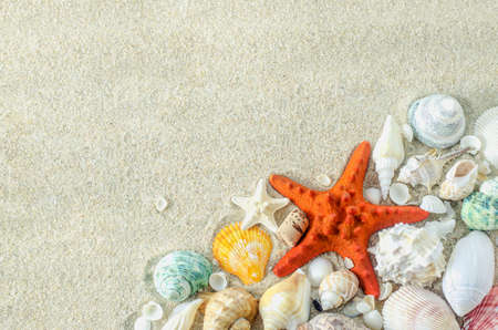 Beach and Summer background - Close up of starfish and seashells on white sand background with white coarse sand Stock Photo