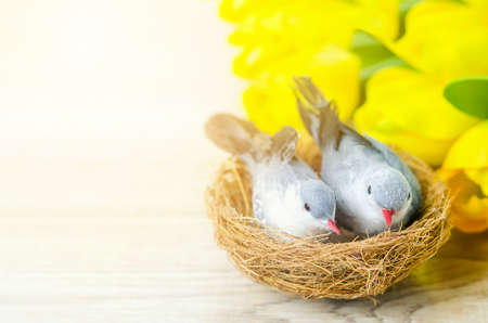 Close up of artificial couple birds with natural nest and yellow tulip flowers on white wooden table with sunlight