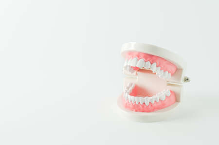 Close up of white teeth model with red gum on white background