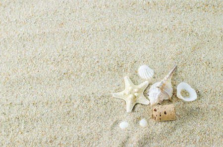 Beach and Summer background - Close up of starfish and seashells on white sand background