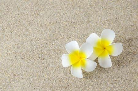 Plumeria flowers on sand background
