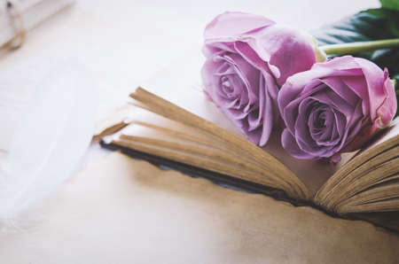 Close up of violet purple rose flower with love letters and feather quill, Rose and old paper with vintage and vignette tone 写真素材