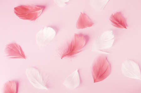 Pink and white feathers pattern on pink