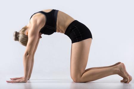 Sportig vacker ung kvinna med yoga, träna, gör Cat Pose, Marjaryasana, motion för flexibel rygg och axlar, asana parat med ko ställer på andas, studio