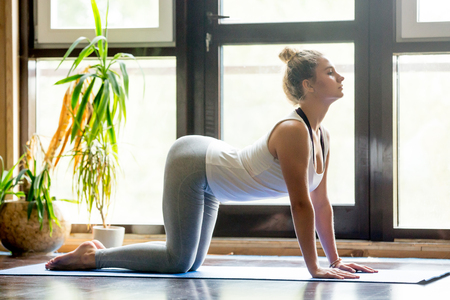 exhale: Full length portrait of attractive young woman working out at home in living room, doing yoga or pilates exercise on mat. Cow posture, Bitilasana, asana paired with Cat Pose on the exhale. Side view Stock Photo