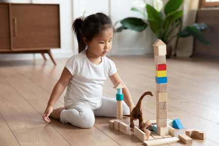 Full length adorable interested small asian vietnamese ethnicity preschool baby girl sitting on warm wooden floor, playing with colorful wooden cubes constructing building alone in living room. 写真素材