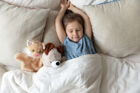 Little girl with hands stretched lying on pillow comfy mattress with fluffy stuffed toys friends cat and teddy bear animals sleep at home. Daytime nap, enough of night rest for healthy child concept
