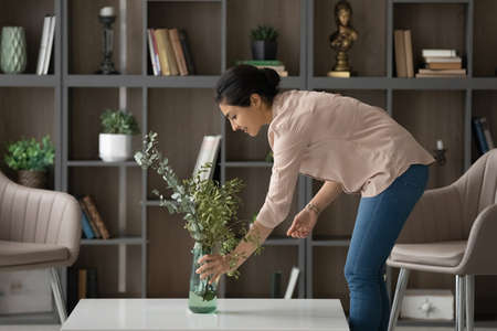 Smiling Indian woman taking care about green plant in cozy living room, pleasant attractive young female tenant renter decorating home, first own apartment, rent or mortgage, interior design concept