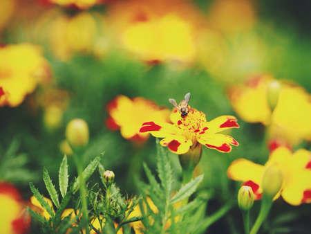 daily routine: Una rutina diaria normal de una abeja obrera. Recopilaci�n. Foto de archivo