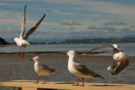 sea gulls gathering around an outdoor picnic table in the hope of scavenging food
