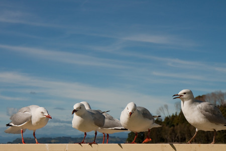 sea gulls gathering on the top of  a picnic table with a blue streaky sky in background