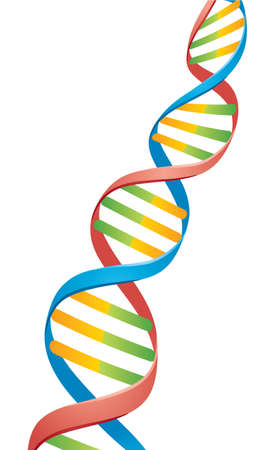 dna strand: Vector illustration of a Double Helix DNA Strand.