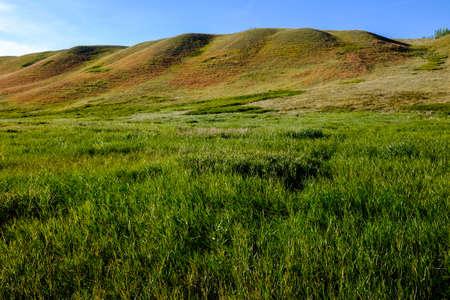 Rolling hills in western high-grass prairie