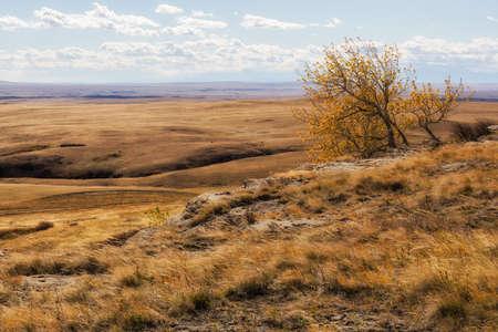 windswept: lone, windswept tree high over western prairie Stock Photo