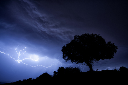 Thunderstorm, lightning, tree, holm oak