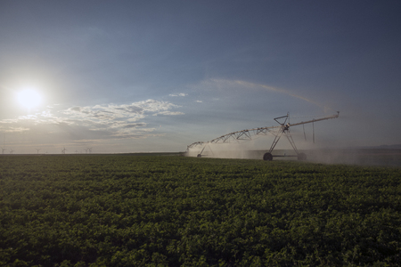 automatic irrigation sprinklers, extensive agriculture, crops