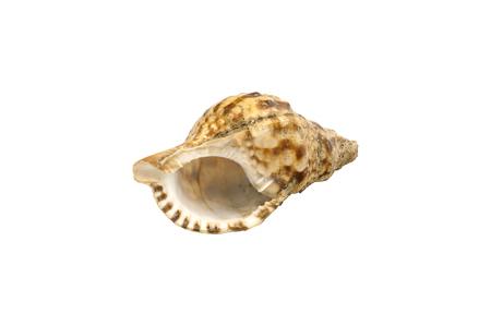 Muschelschale mit weißem Hintergrund