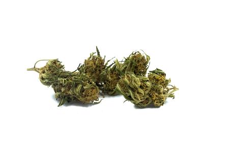 Marijuana buds on white background