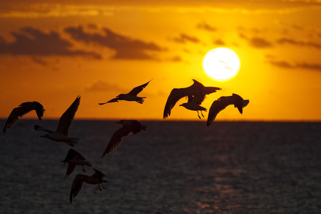 Seagulls in the sea at sunset