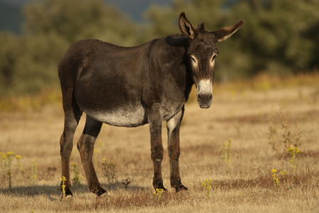 Donkey in the field background. Stock Photo