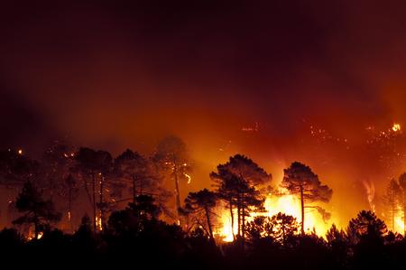 Forest fire, Pinus pinaster, Guadalajara (Spain)