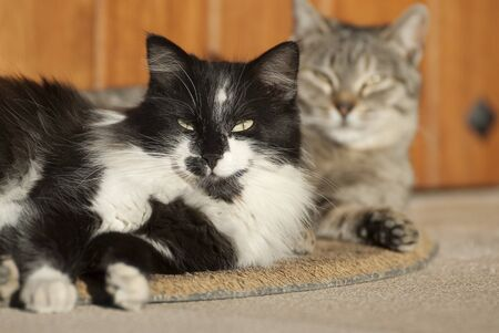 Cats lying resting on the doormat
