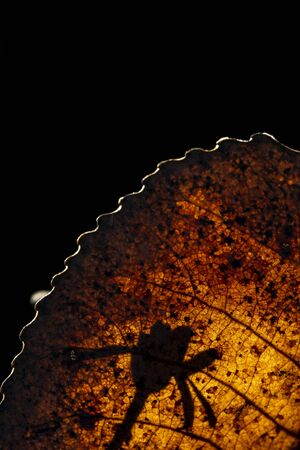 Backlit tree leaf in autumn, with small flower silhouette