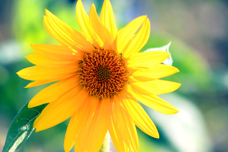 beautify: Flowers in the park, enjoy the blooming sunflower,  beautify the environment. Stock Photo