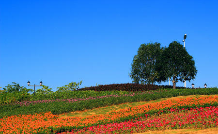 beautify: Cityscape, landscape engineering, natural plant cultivation, green flowers and trees, flowers bloom, beautify the natural environment Stock Photo