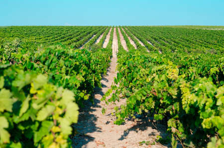 sherry: Landscape of a flowering vine with blue sky