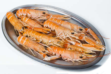 Norway lobster on white background photo