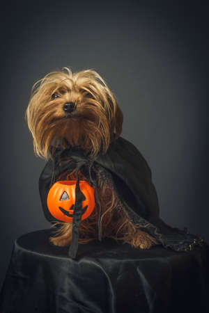 Portrait of dog in disguise for Halloween Banque d'images