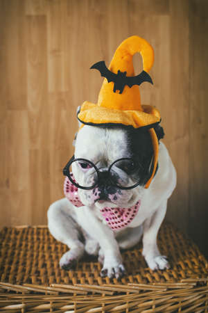 disguised: Portrait of dog in disguise for Halloween Stock Photo