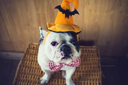dieren: Portret van Franse bulldog met hoed halloween