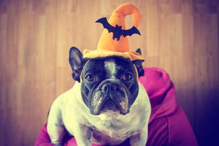 colores pastel: Retrato de bulldog francés con sombrero de halloween en colores pastel