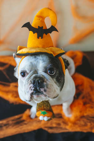 Portrait of dog in disguise for Halloween Stock Photo